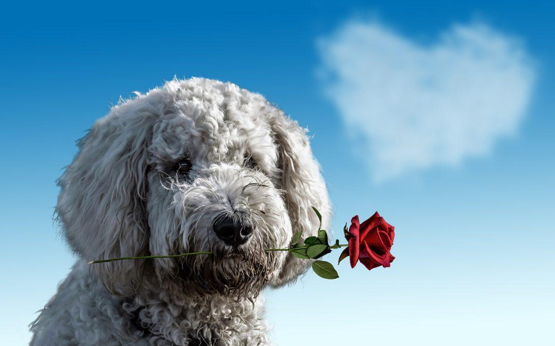 """Te REGALAMOS una🌹rosa🌹en """"San Valentin"""" – JuJuJu Aquacenter"""
